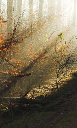 2449 скачать обои Растения, Пейзаж, Деревья - заставки и картинки бесплатно