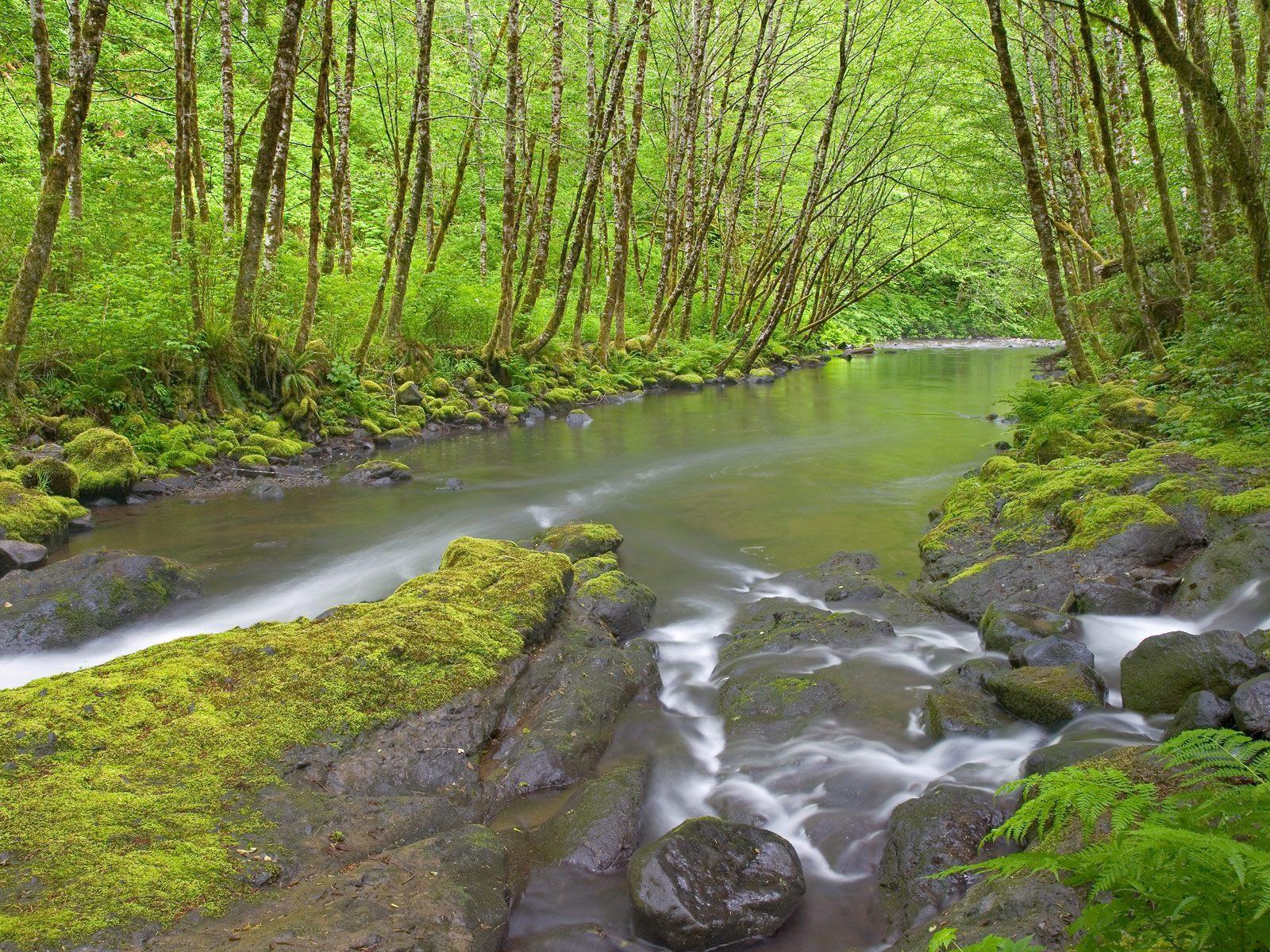 9627 скачать обои Пейзаж, Вода, Река, Деревья - заставки и картинки бесплатно