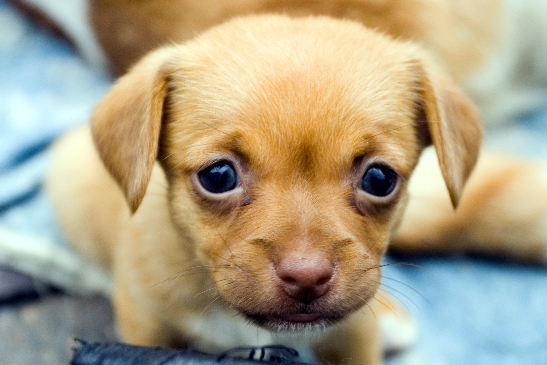 85455 download wallpaper Animals, Puppy, Muzzle, Eyes, Kid, Tot screensavers and pictures for free