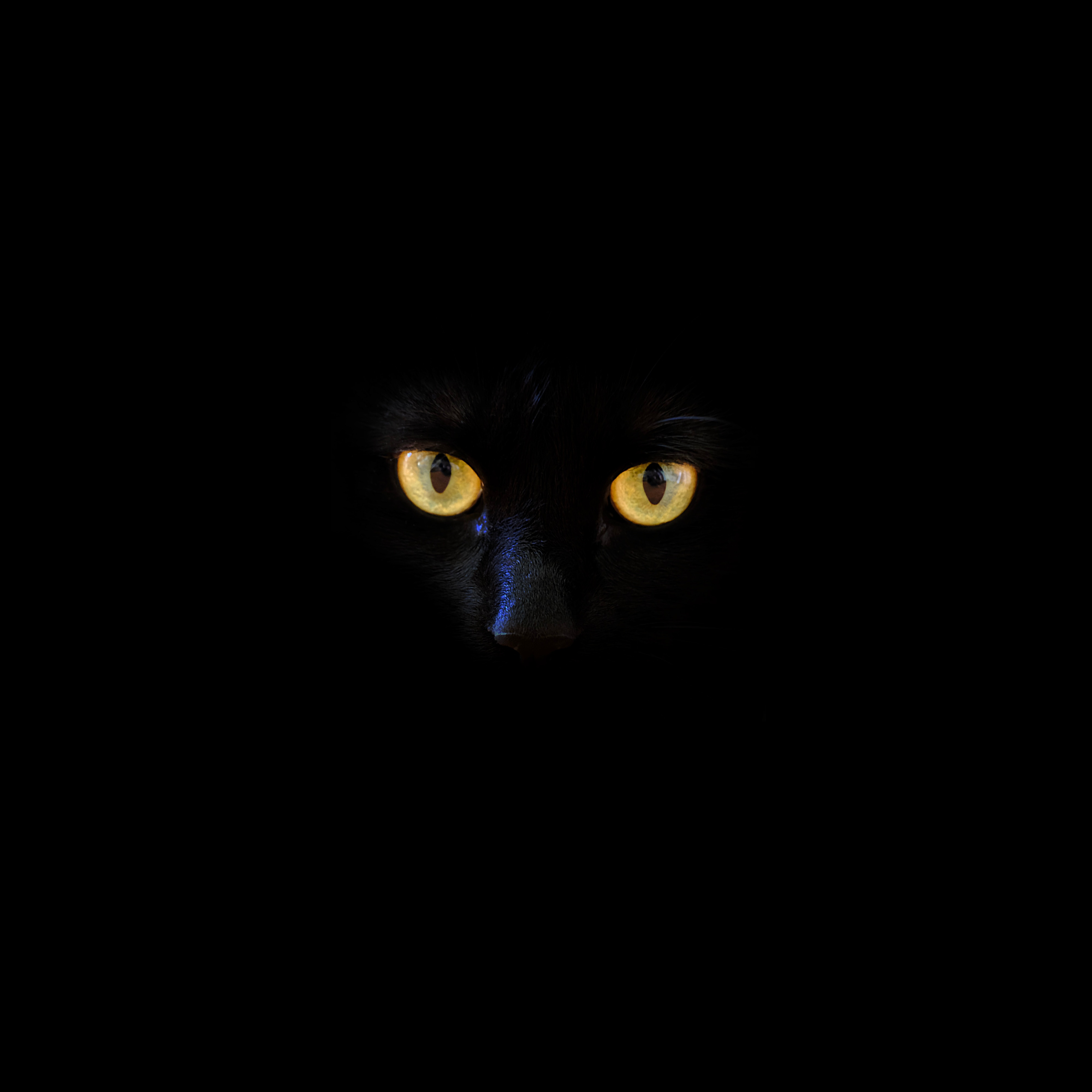 78528 download wallpaper Cat, Black Cat, Eyes, Darkness screensavers and pictures for free