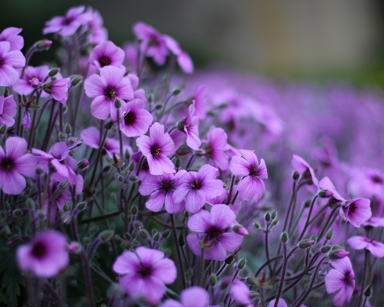 48037 скачать обои Растения, Цветы - заставки и картинки бесплатно