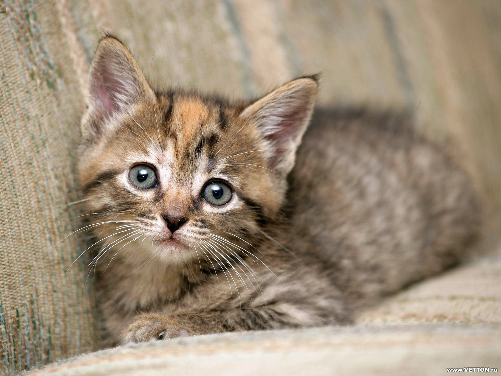 1044 download wallpaper Animals, Cats screensavers and pictures for free