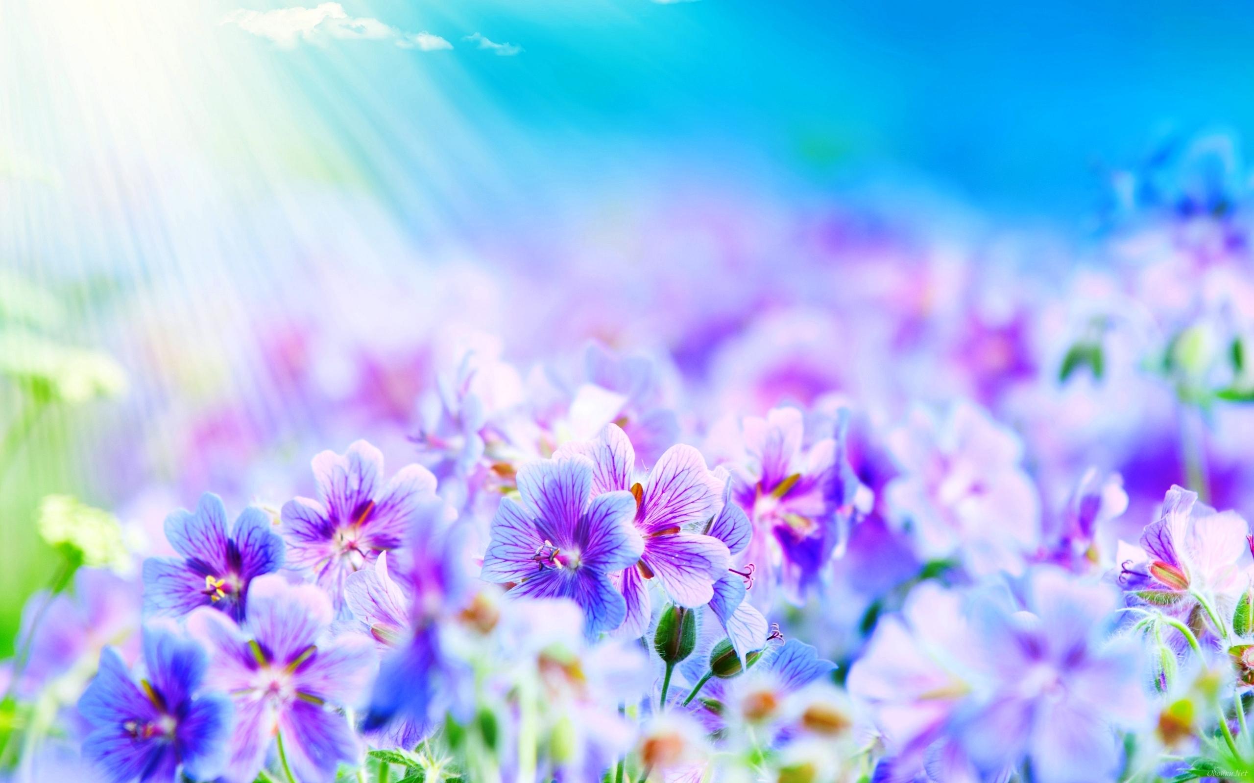21501 скачать обои Растения, Цветы, Рисунки - заставки и картинки бесплатно