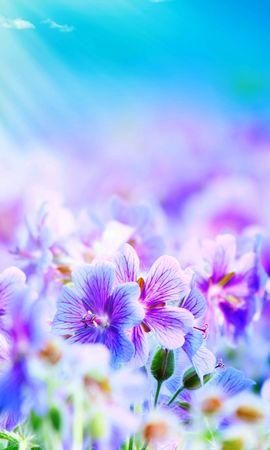 21501 télécharger le fond d'écran Plantes, Fleurs, Dessins - économiseurs d'écran et images gratuitement