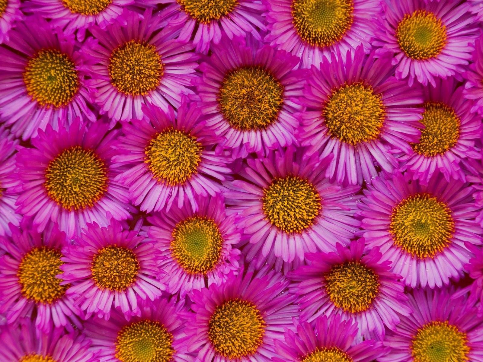 9703 скачать обои Растения, Цветы, Фон - заставки и картинки бесплатно