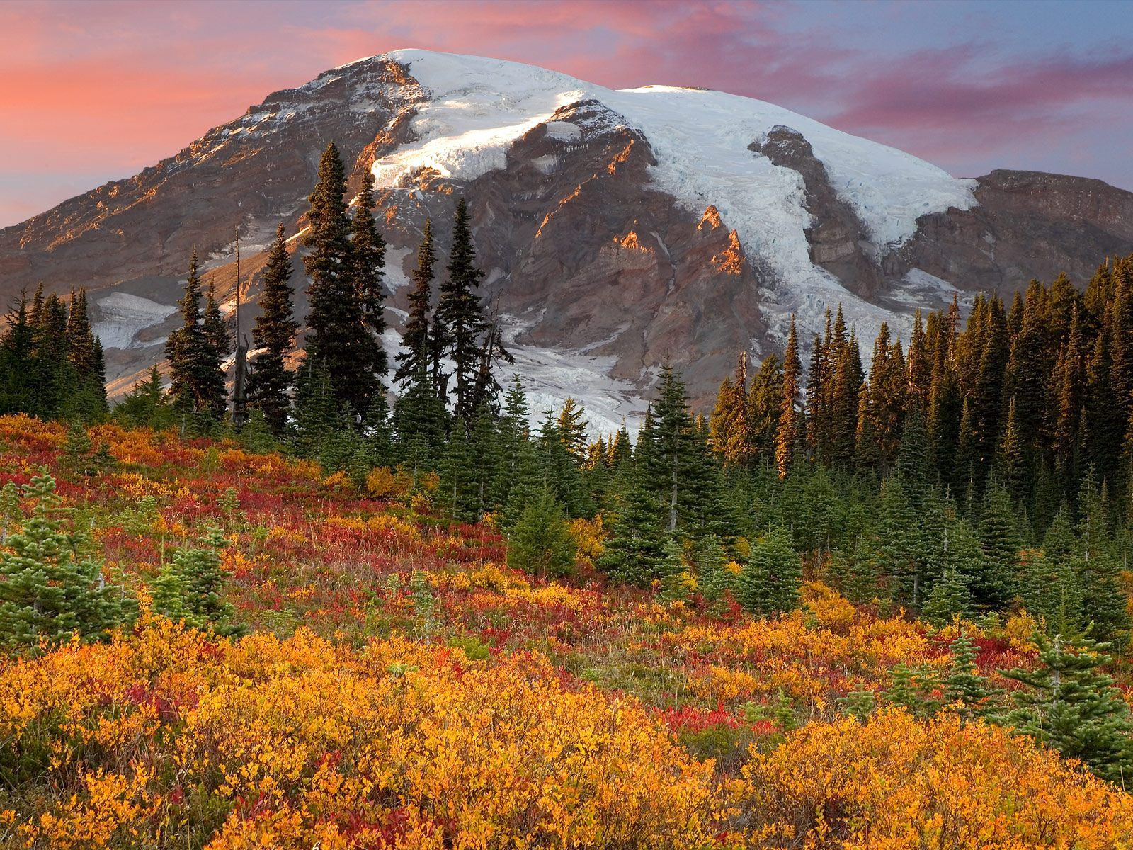 114088 обои 720x1520 на телефон бесплатно, скачать картинки Природа, Деревья, Горы, Осень, Снег, Вершина, Цвета, Зеленый, Желтый, Ели 720x1520 на мобильный
