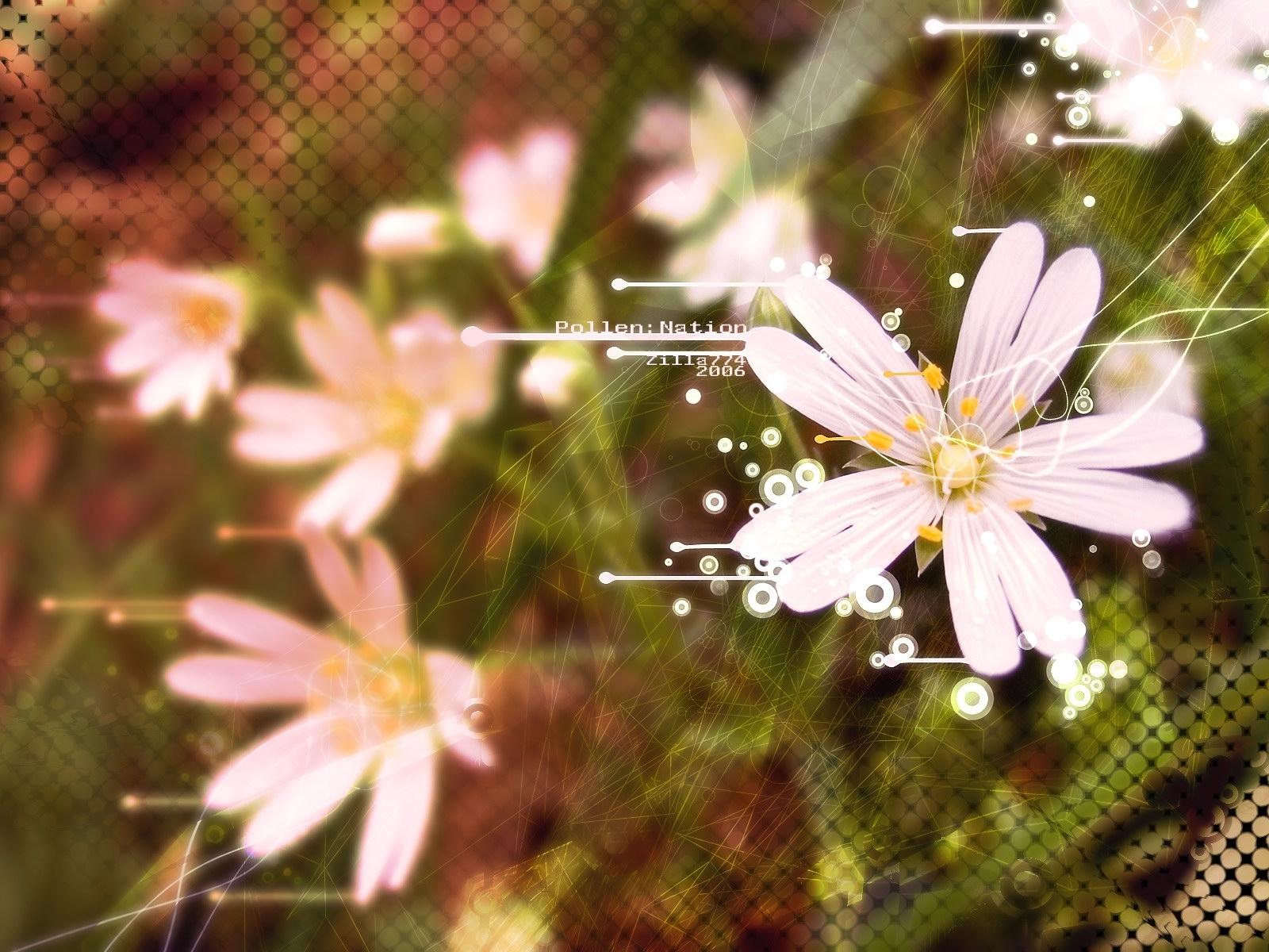 3830 скачать обои Растения, Цветы - заставки и картинки бесплатно