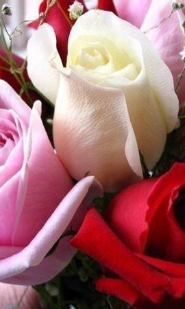 9029 скачать обои Праздники, Растения, Цветы, Розы, Открытки, 8 Марта - заставки и картинки бесплатно