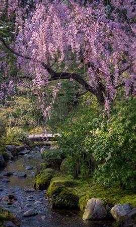 85116 скачать обои Сакура, Деревья, Река, Камни, Природа, Цветы - заставки и картинки бесплатно