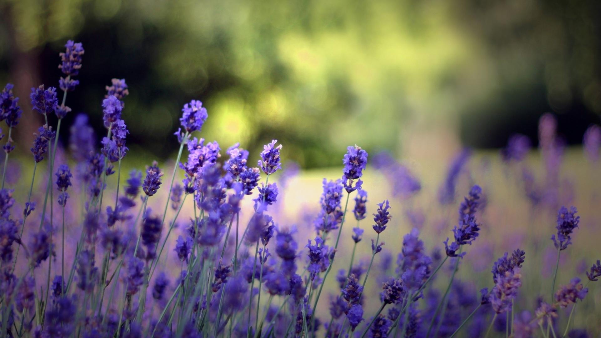 21240 скачать обои Растения, Цветы - заставки и картинки бесплатно
