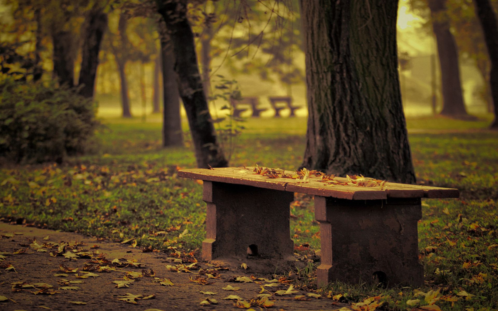 131755 Screensavers and Wallpapers Bench for phone. Download Nature, Trees, Autumn, Leaves, Park, Loneliness, Bench pictures for free