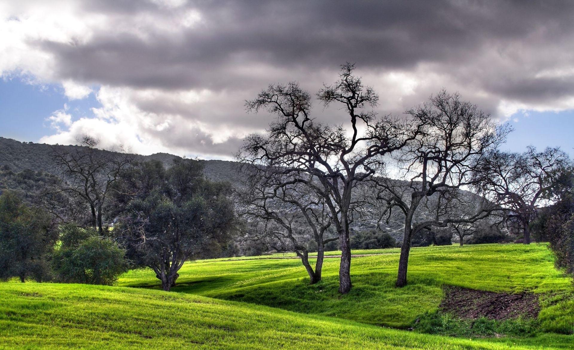 130612 baixar papel de parede Natureza, Árvores, Jardim, Céu, Nuvem, Preto E Branco, Local, Manchar - protetores de tela e imagens gratuitamente