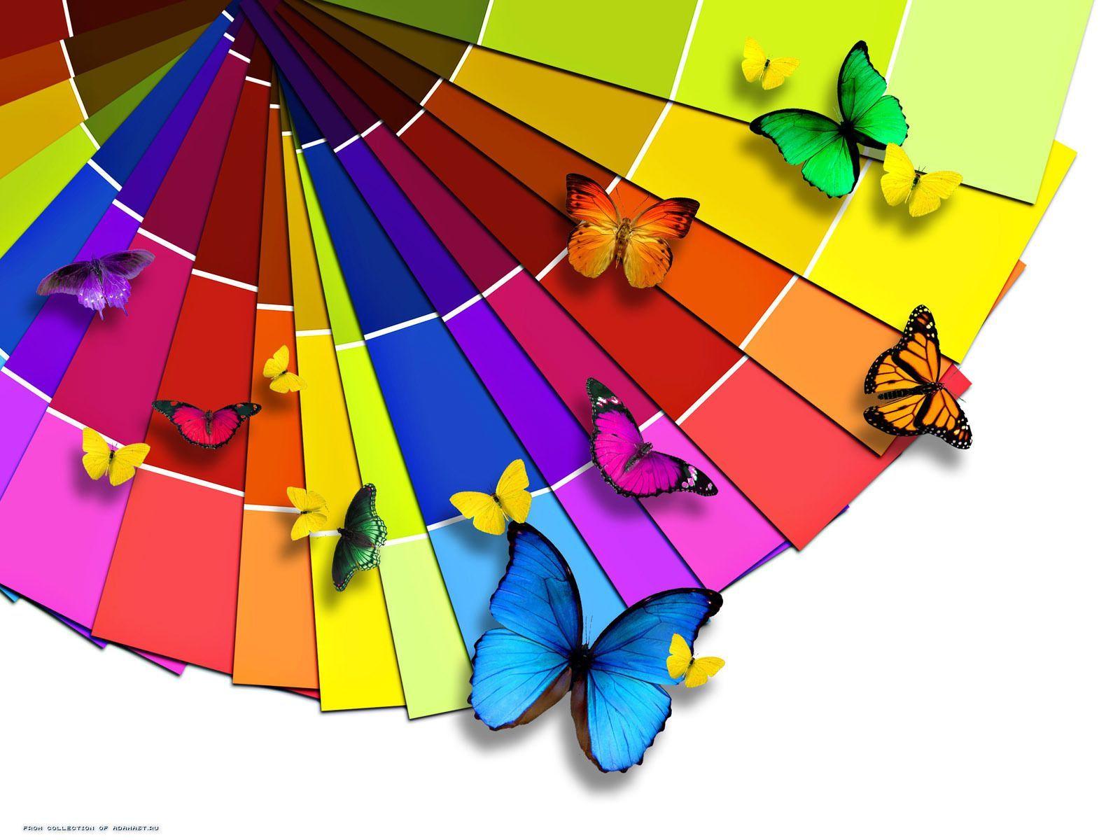 11921 descargar fondo de pantalla Mariposas, Insectos, Arco Iris: protectores de pantalla e imágenes gratis