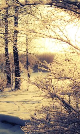 19354 скачать обои Пейзаж, Зима, Деревья, Закат, Снег - заставки и картинки бесплатно