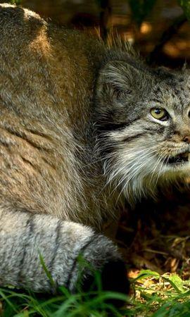 25142 скачать обои Животные, Кошки (Коты, Котики) - заставки и картинки бесплатно