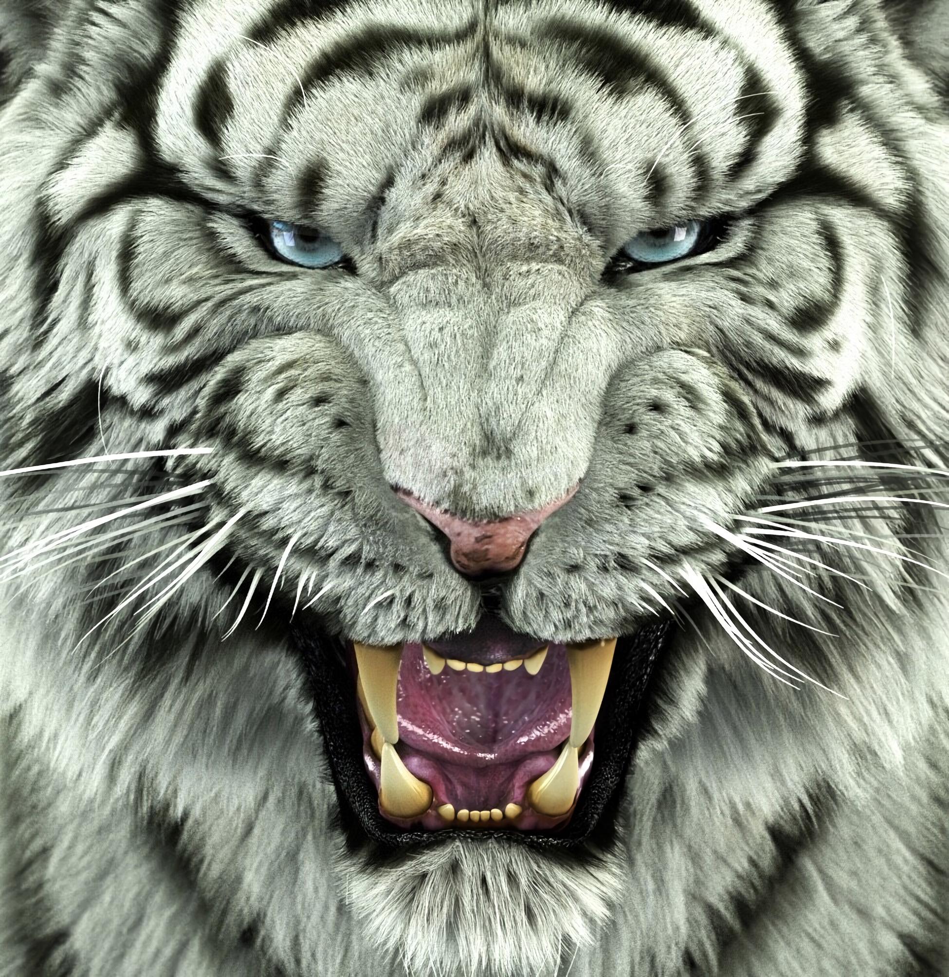 62495 обои 240x320 на телефон бесплатно, скачать картинки Хищник, Большая Кошка, Животные, Тигр, Бенгальский Тигр 240x320 на мобильный