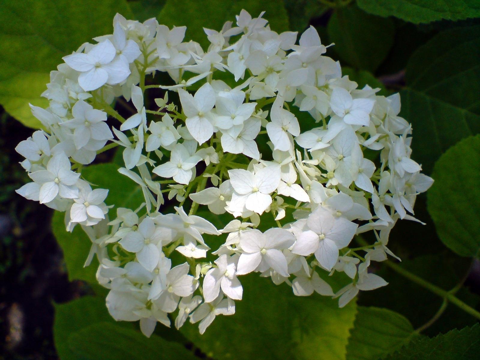6094 скачать обои Растения, Цветы - заставки и картинки бесплатно