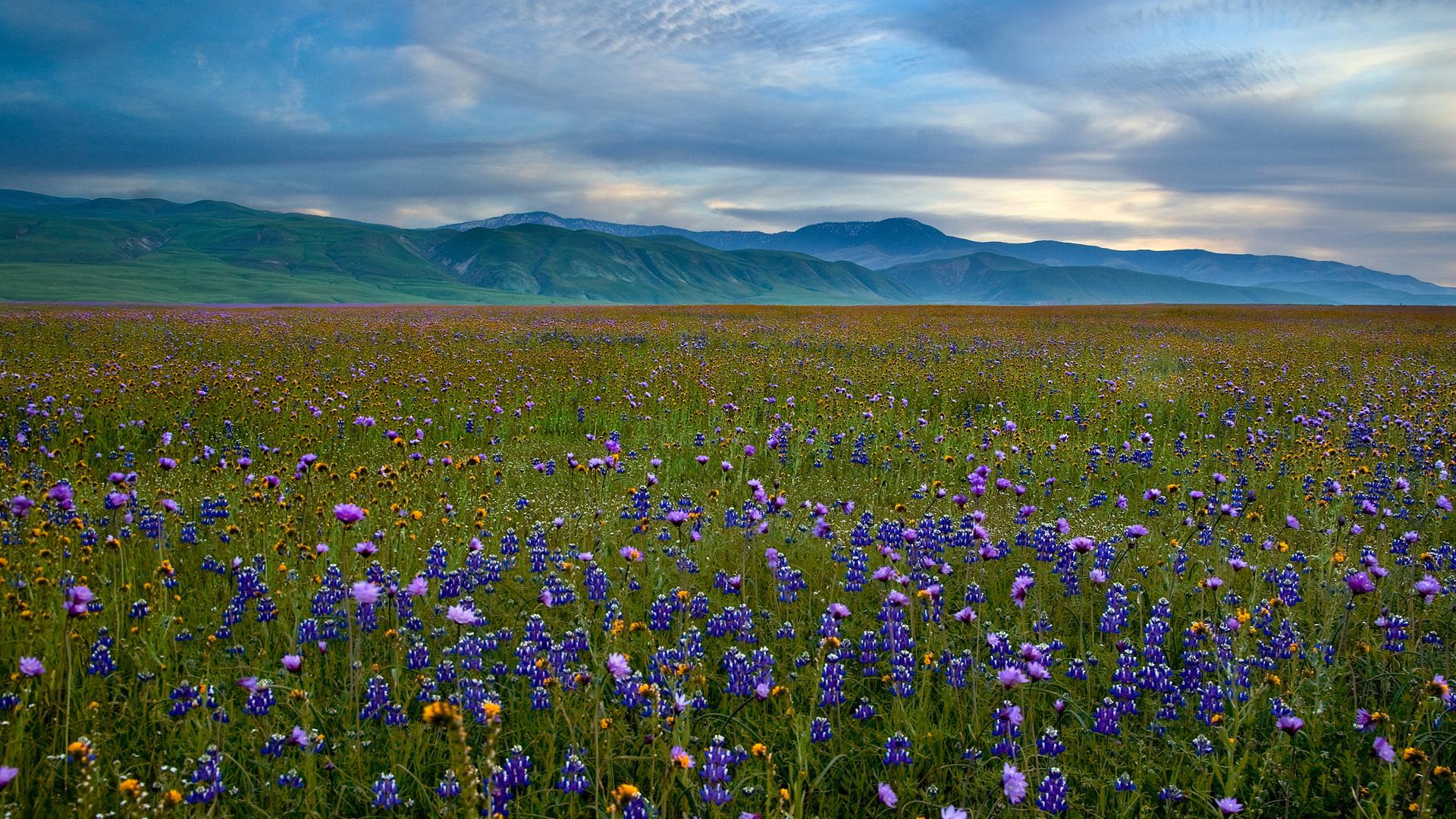 40649 скачать обои Пейзаж, Цветы, Поля - заставки и картинки бесплатно