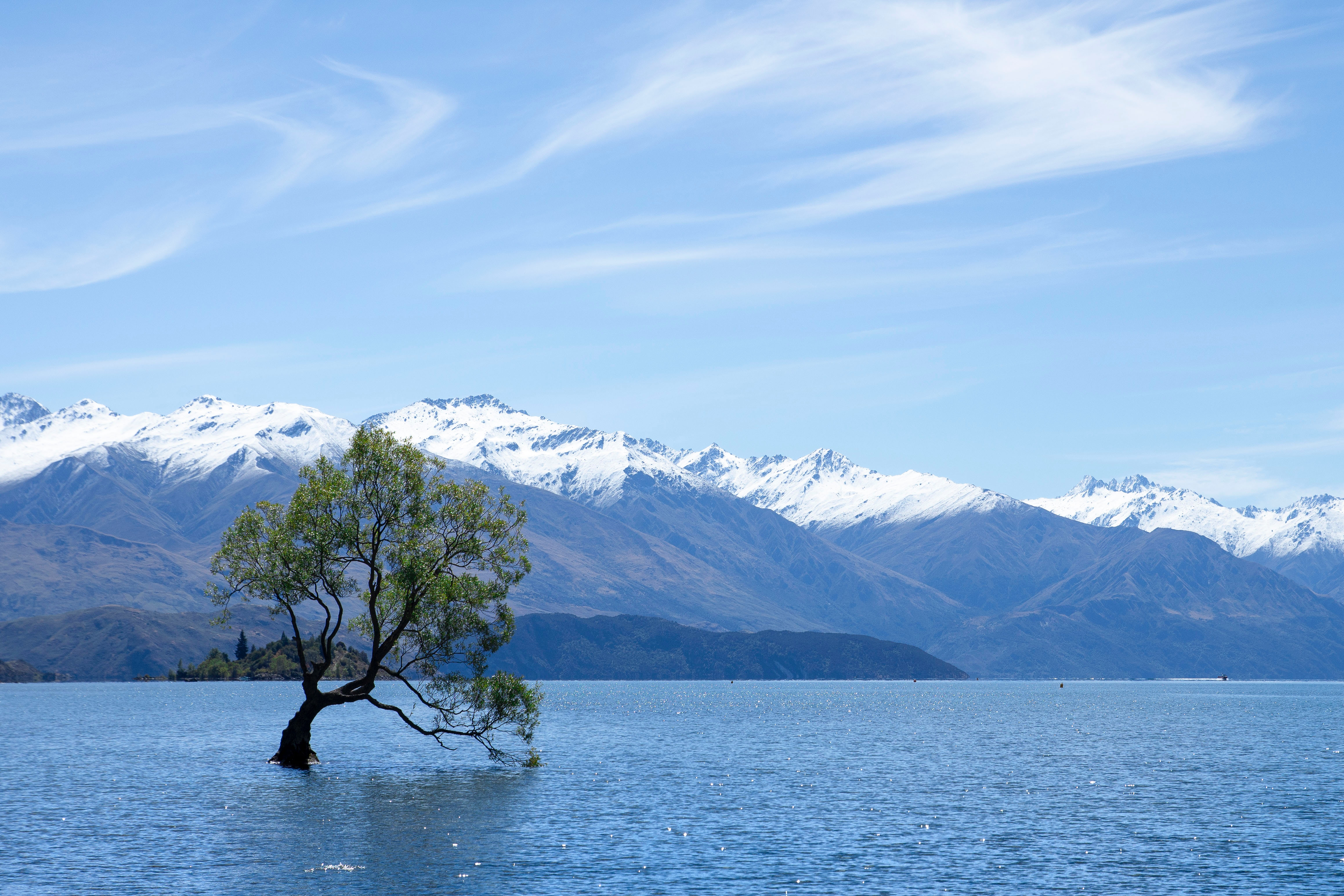 115022 Screensavers and Wallpapers New Zealand for phone. Download Nature, Mountains, Lake, New Zealand, Wood, Tree, Wanaka pictures for free