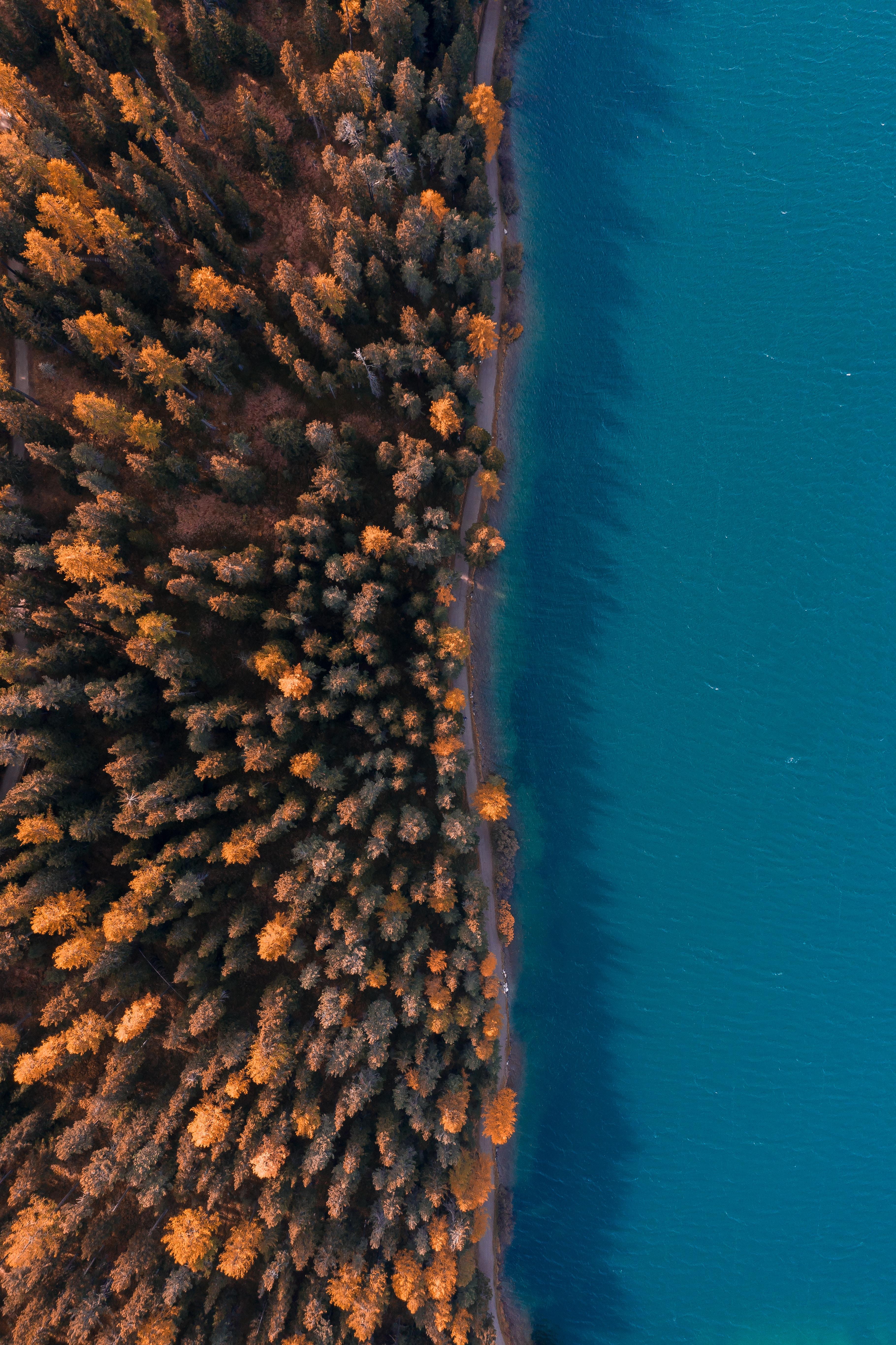 155561 免費下載壁紙 性质, 森林, 海, 从上面看, 顶视图, 树, 水, 海岸 屏保和圖片