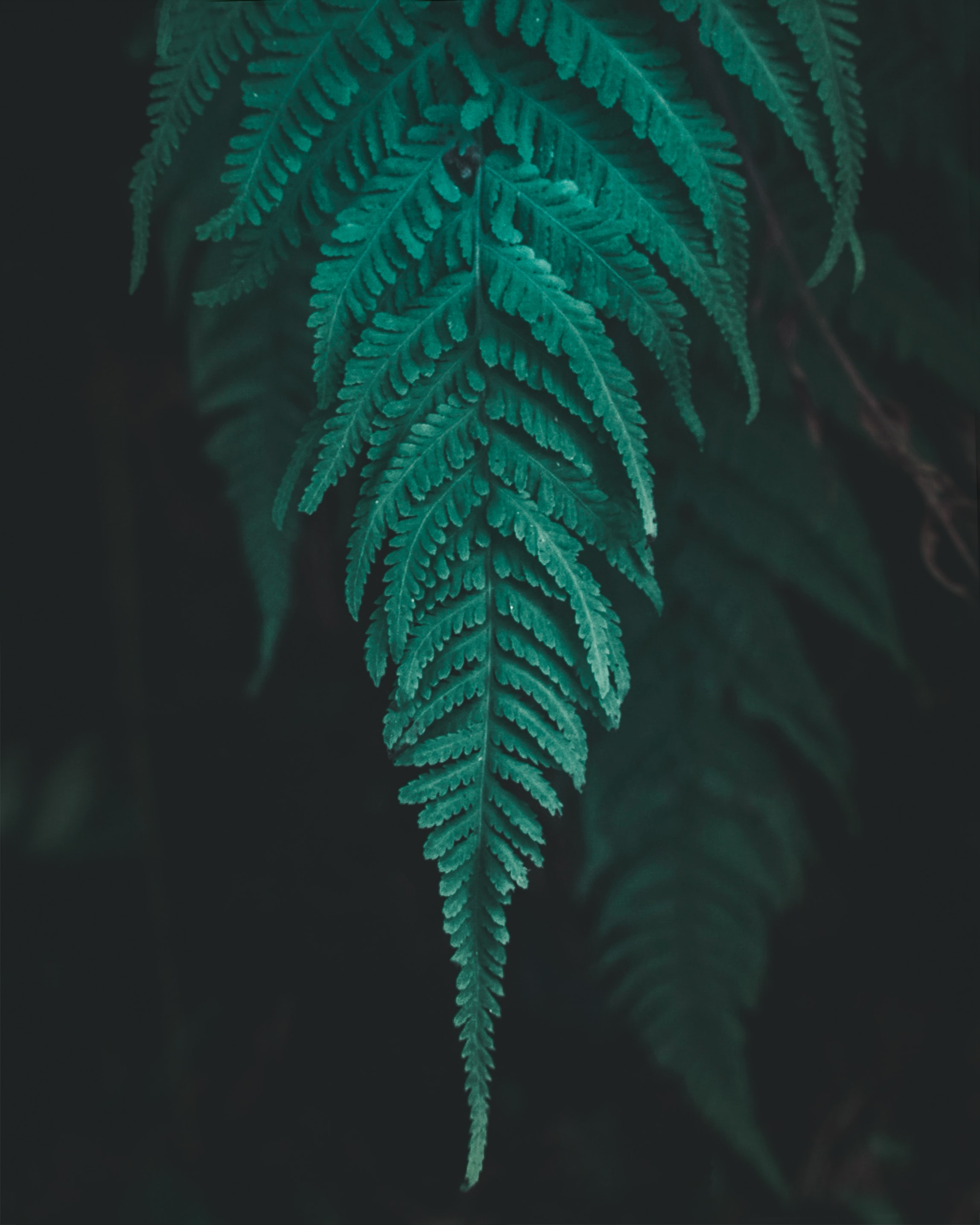 56476 download wallpaper Plant, Macro, Fern, Leaflet screensavers and pictures for free