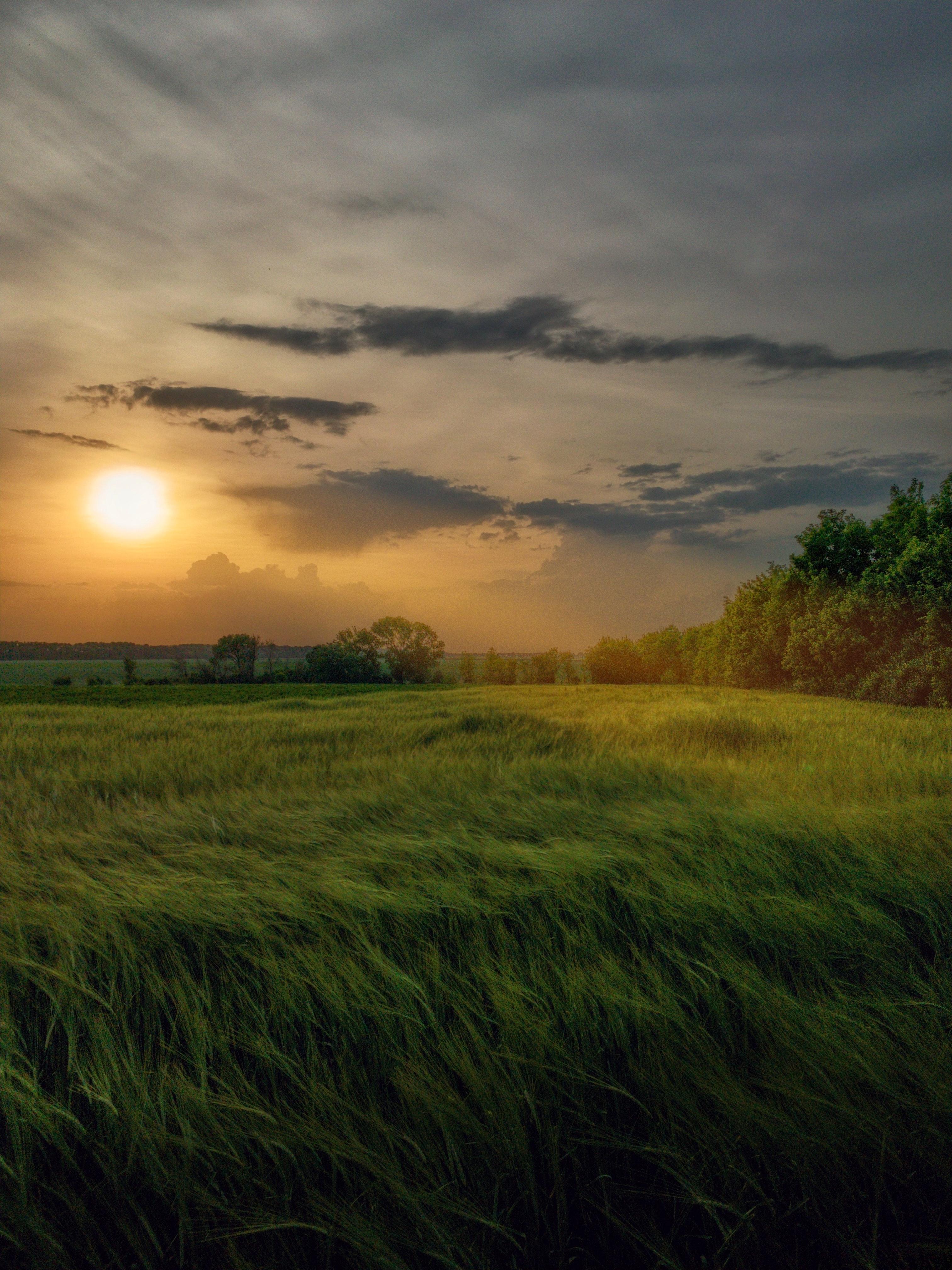 139368壁紙のダウンロード自然, フィールド, 畑, 草, ビーム, 光線, 広々とした, スコープ, サン-スクリーンセーバーと写真を無料で