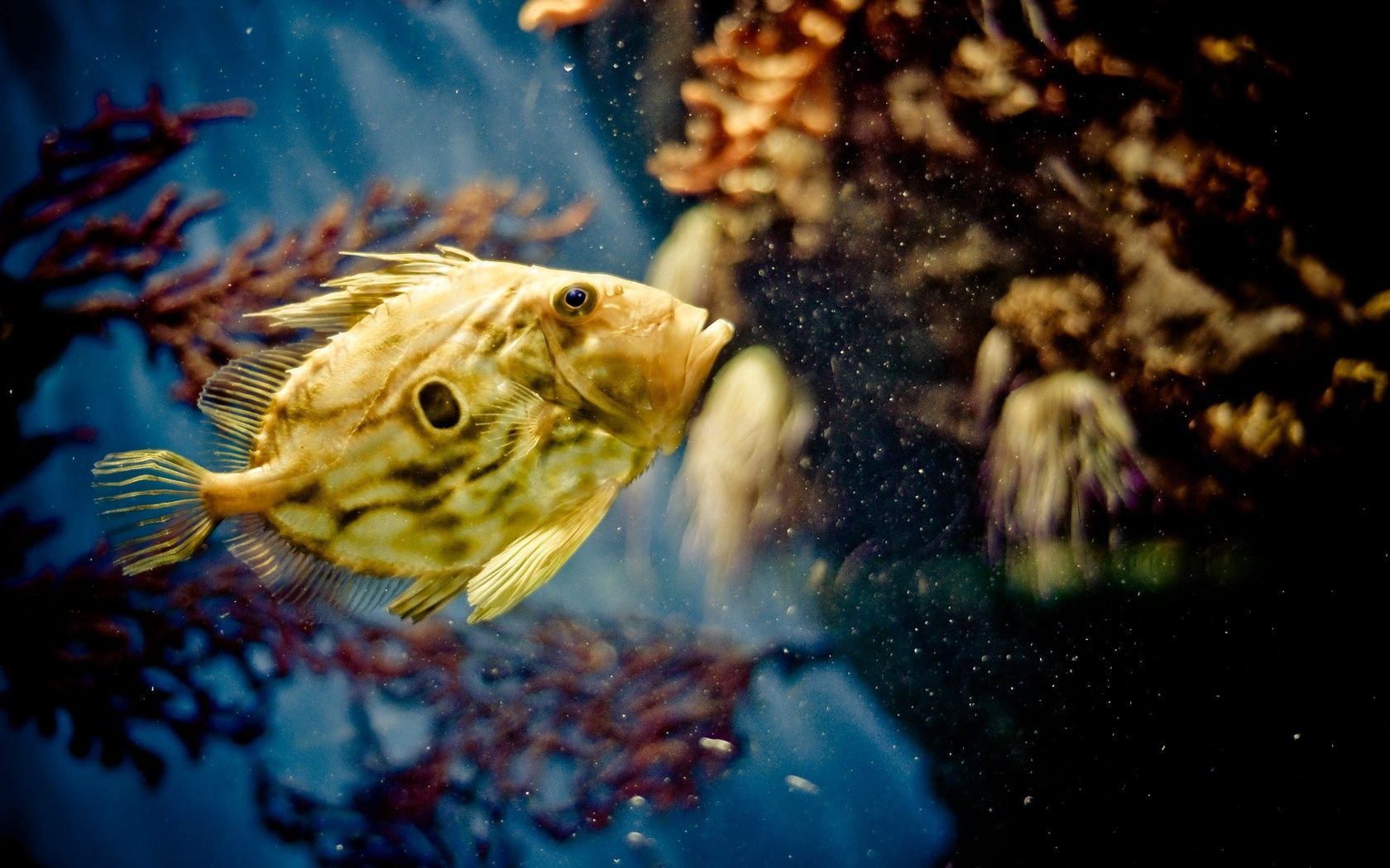 52559 download wallpaper Animals, Fish, Underwater, Submarine, Swimming screensavers and pictures for free