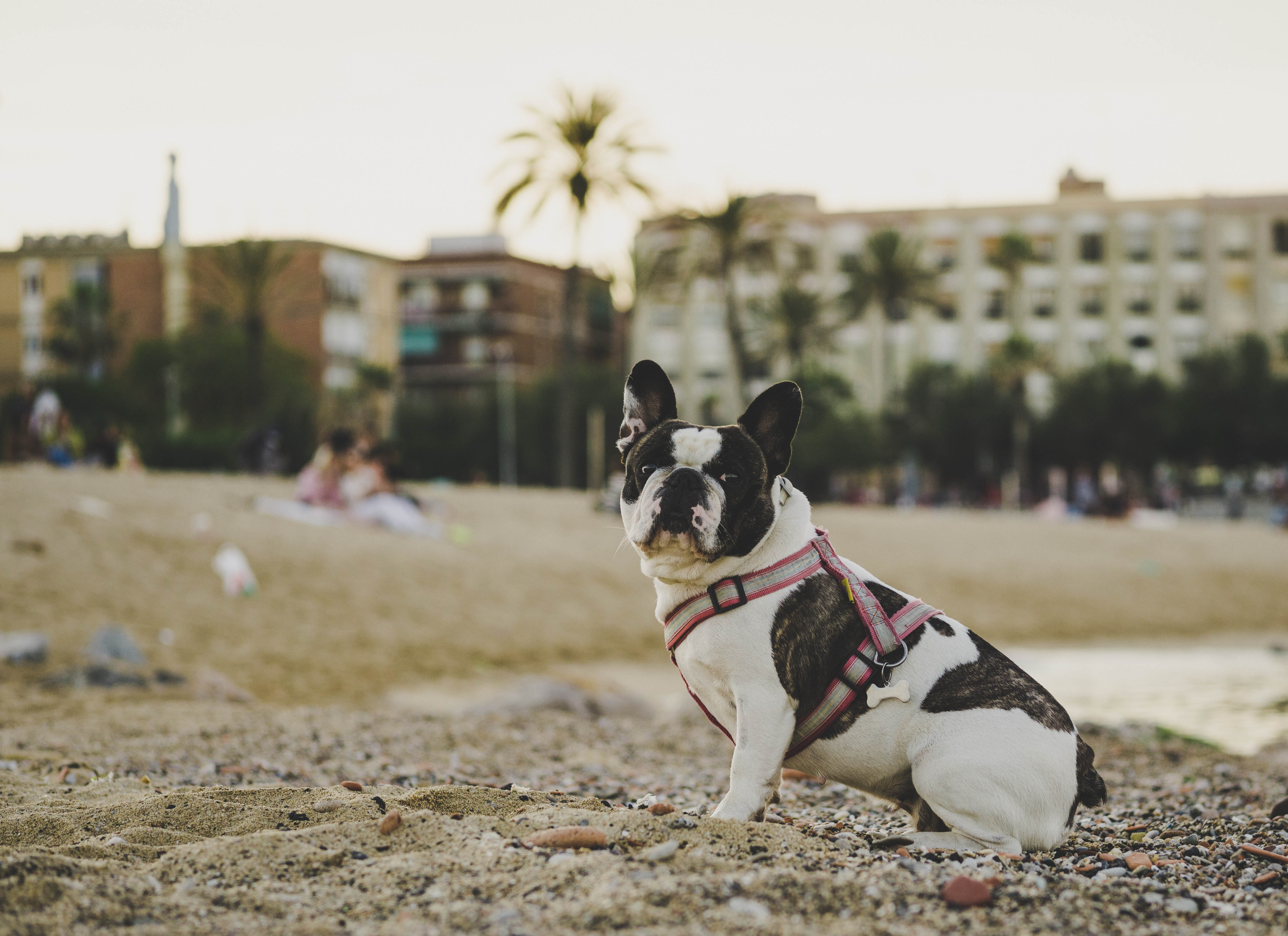 108726 download wallpaper Animals, Bulldog, Dog, Is Sitting, Sits, Sand, Stones screensavers and pictures for free