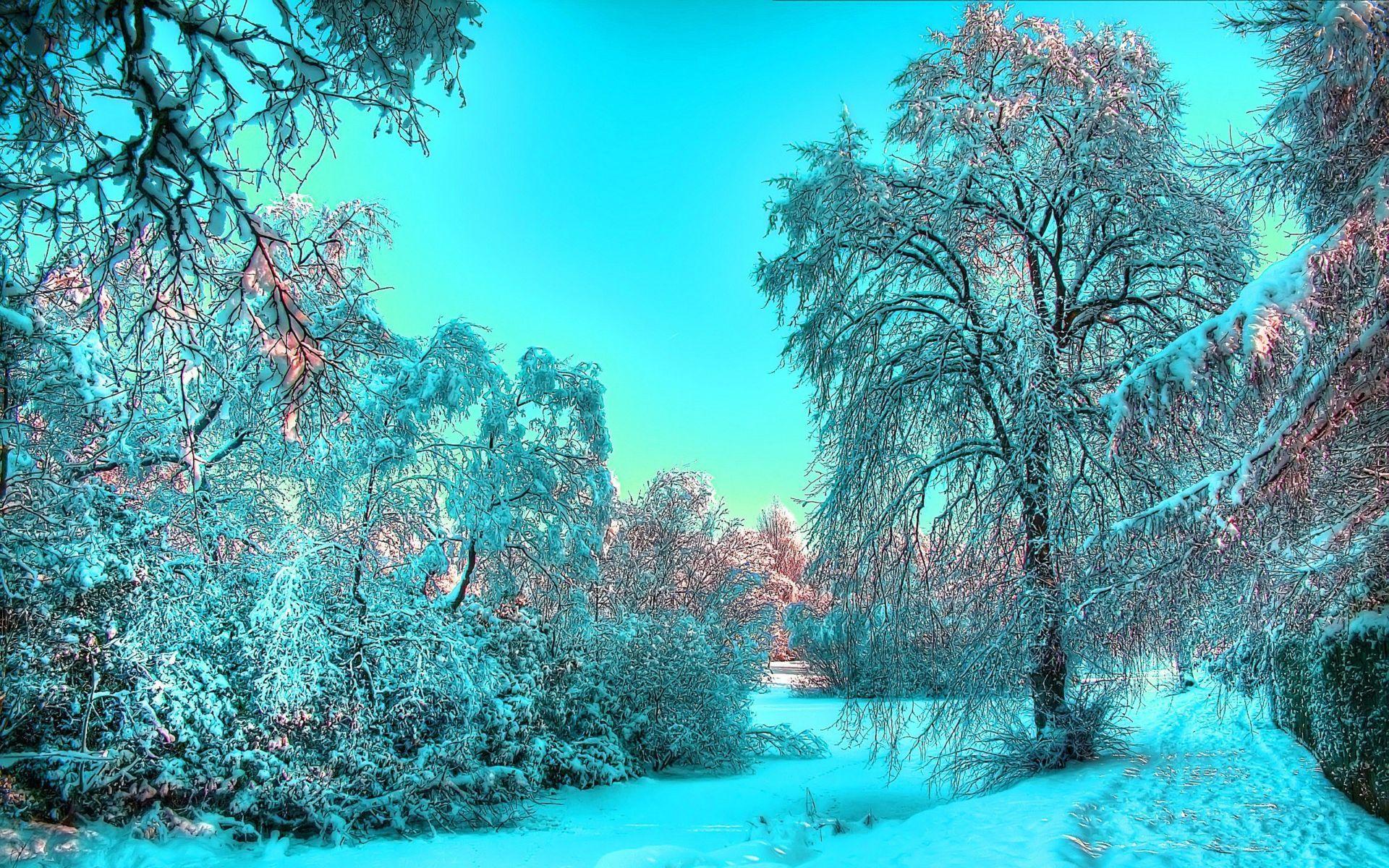 23042 descargar fondo de pantalla Paisaje, Invierno, Árboles, Nieve: protectores de pantalla e imágenes gratis