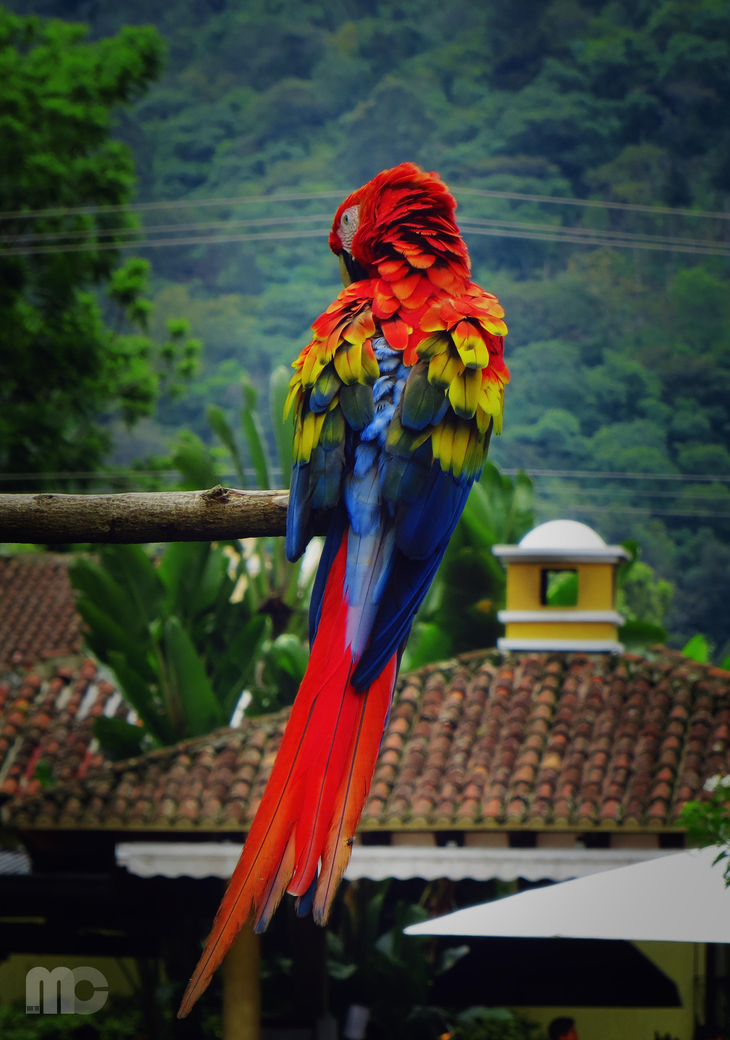 157196 Заставки и Обои Попугаи на телефон. Скачать Животные, Попугаи, Перья, Птица, Окрас, Ара картинки бесплатно