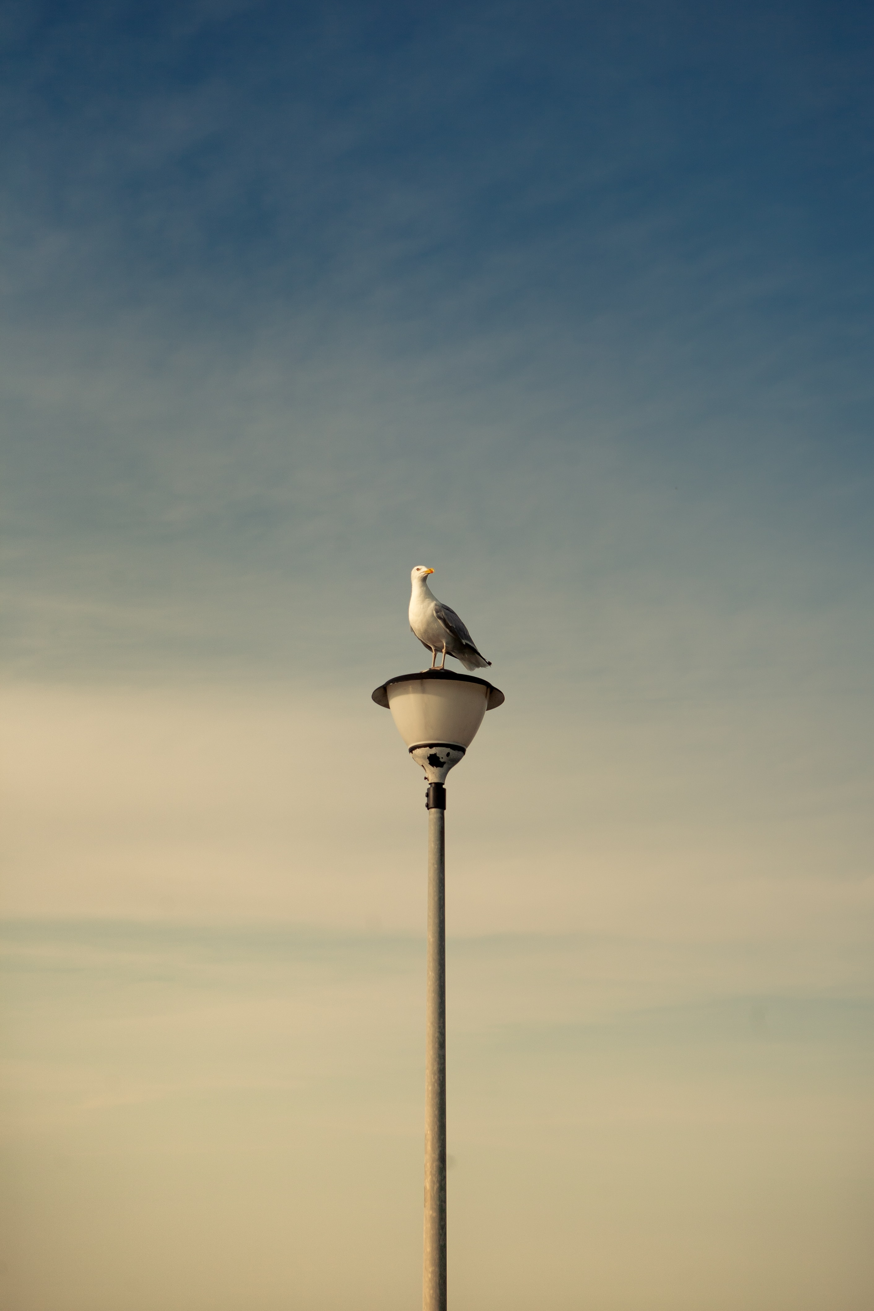 133557 download wallpaper Animals, Gull, Seagull, Bird, Lamp, Lantern, Sky screensavers and pictures for free