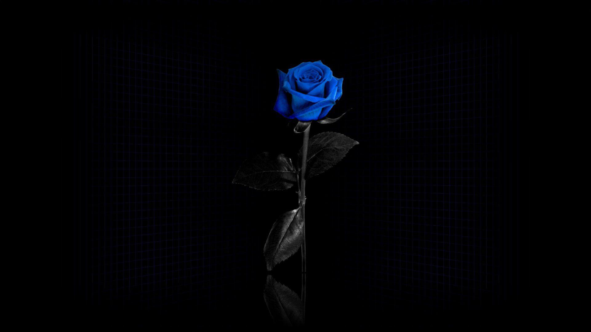 118184 скачать обои Темные, Роза, Цветок, Синяя, Сетка, Отражение - заставки и картинки бесплатно