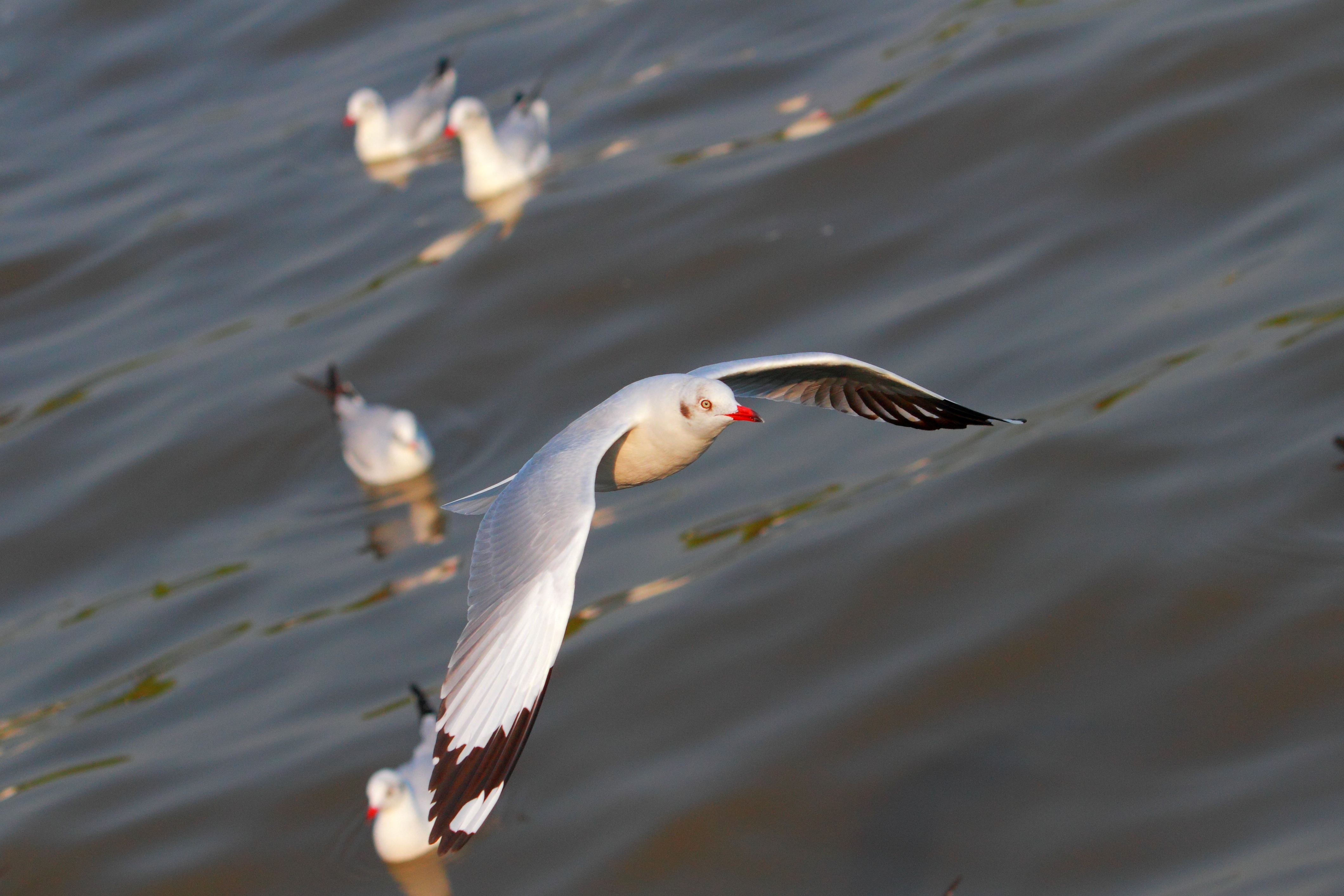 154373 download wallpaper Animals, Flight, Sweep, Wave, Birds, Seagulls screensavers and pictures for free