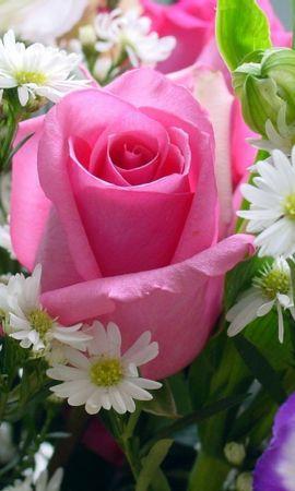 43290 télécharger le fond d'écran Plantes, Fleurs, Roses - économiseurs d'écran et images gratuitement