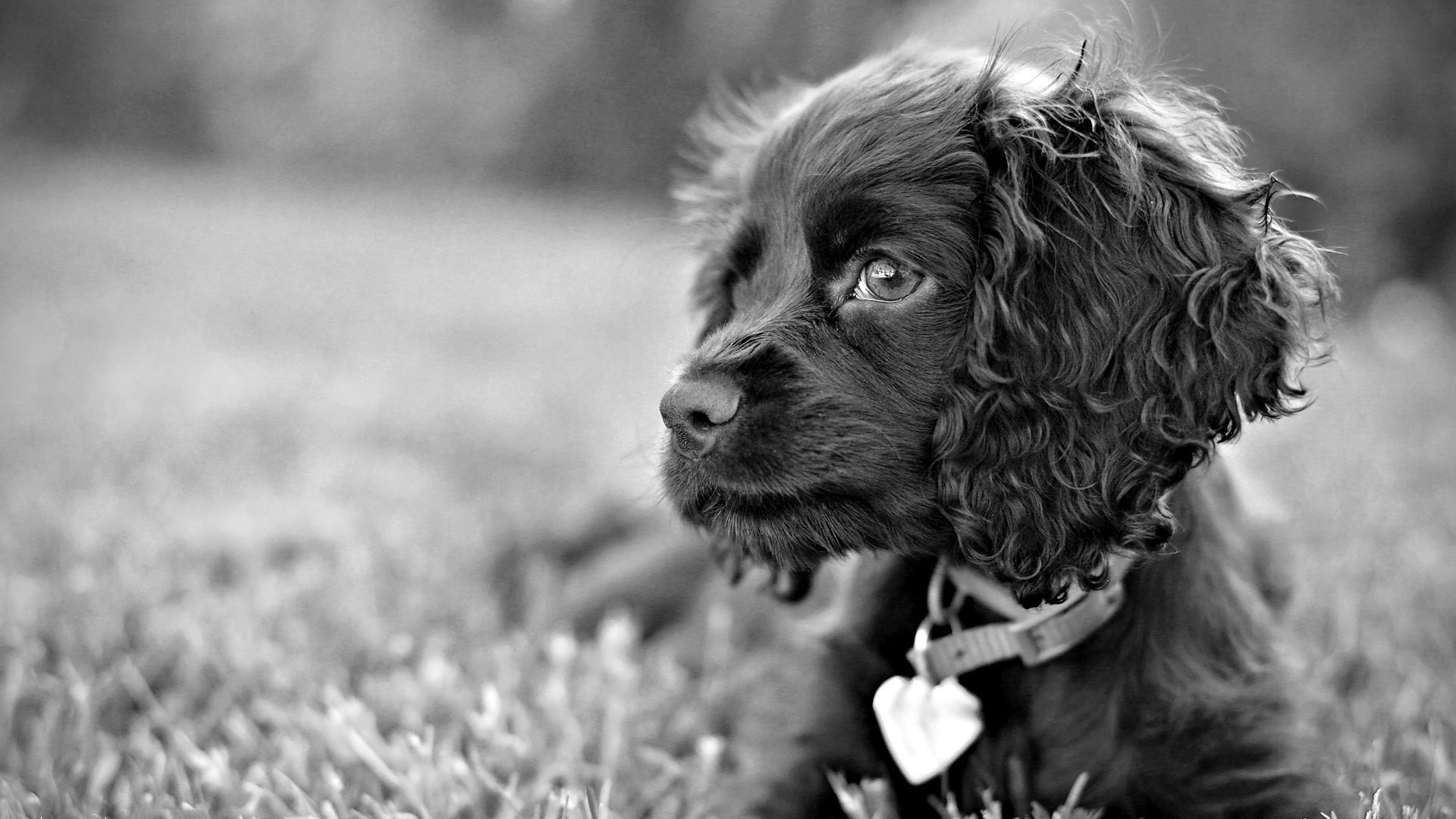 156189 download wallpaper Animals, Dog, Puppy, Grey screensavers and pictures for free