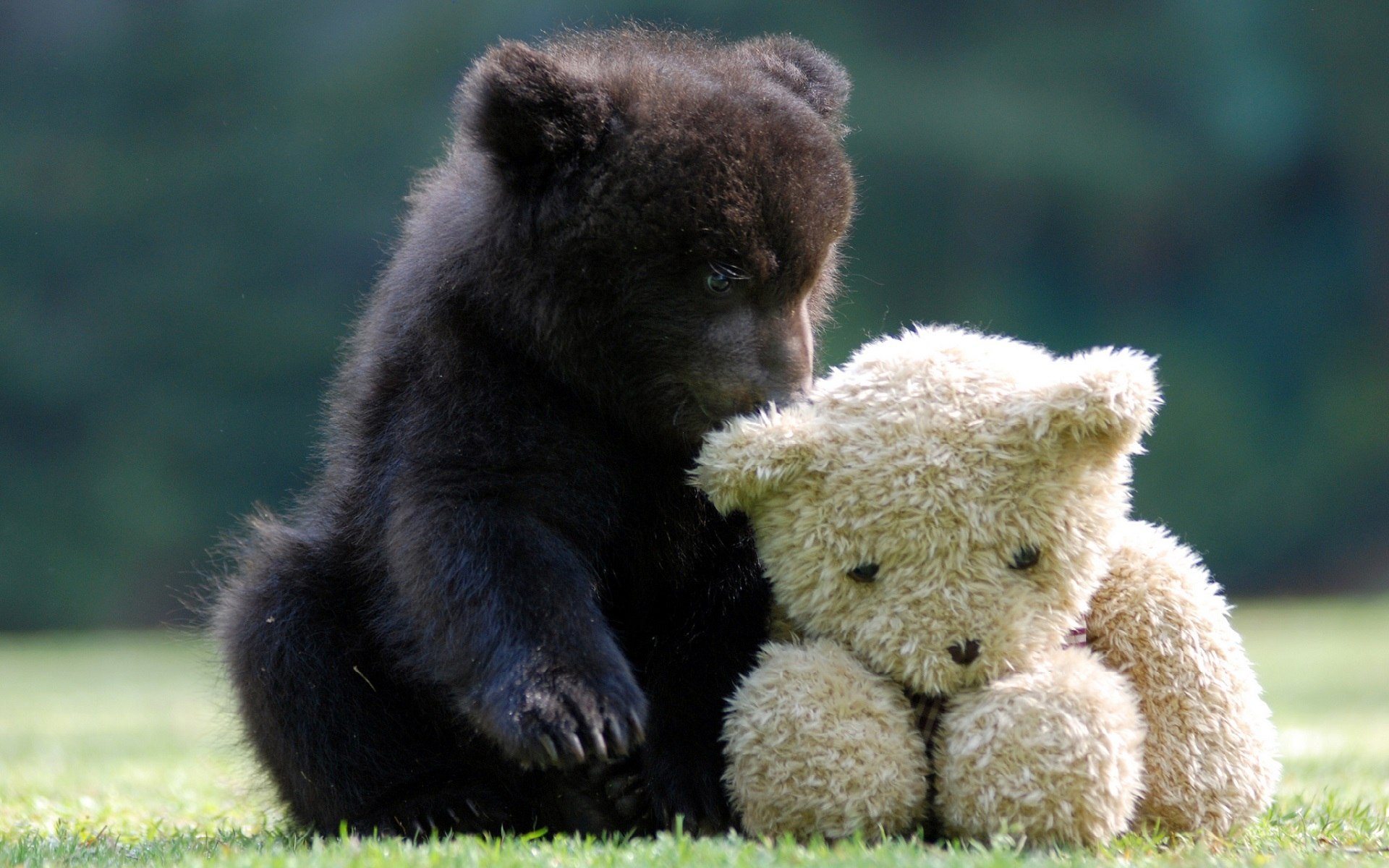 47583 download wallpaper Animals, Toys, Bears screensavers and pictures for free