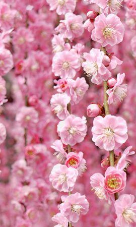 24820 скачать обои Растения, Цветы - заставки и картинки бесплатно