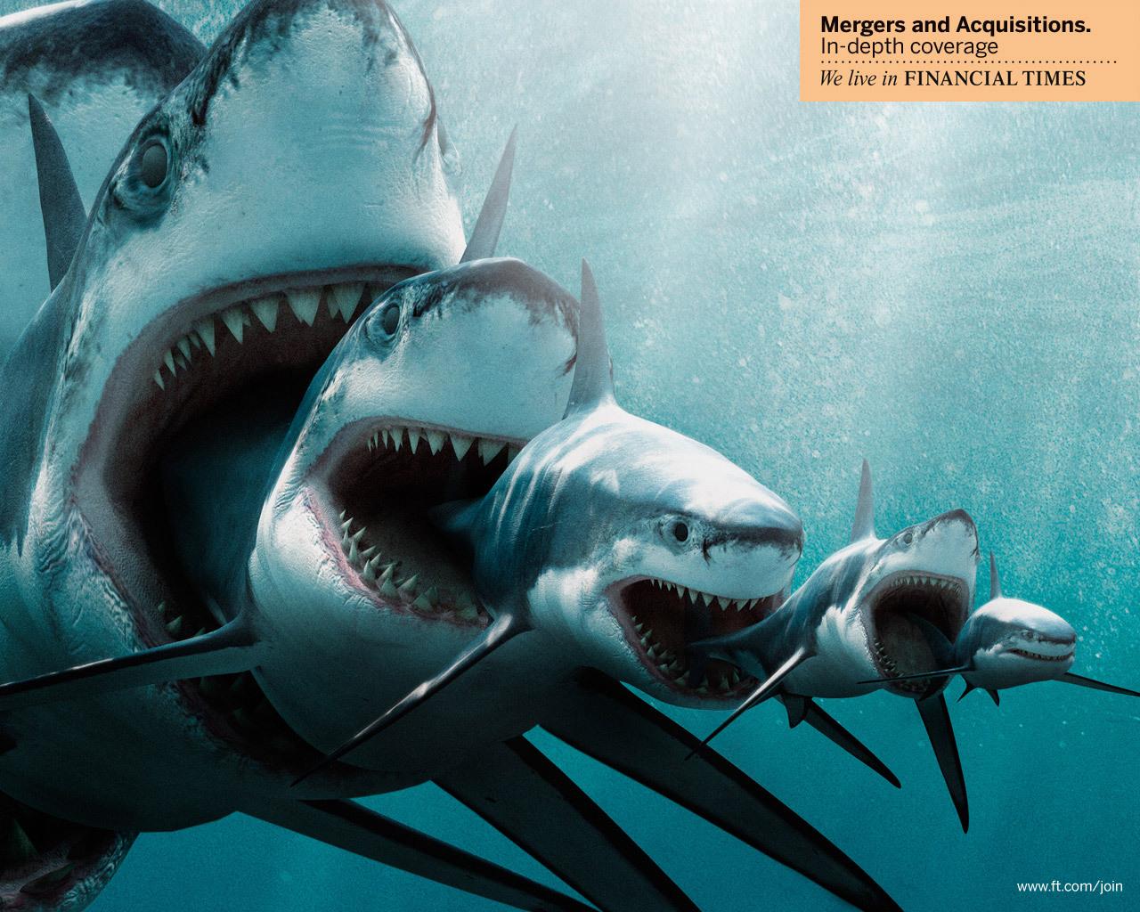 12108 Заставки и Обои Рыбы на телефон. Скачать Рыбы, Акулы, Животные картинки бесплатно