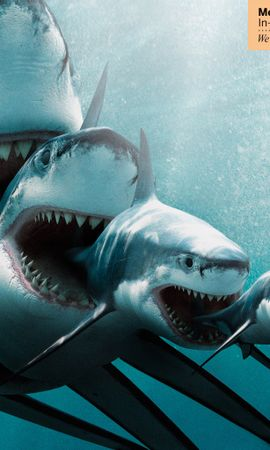 12108 download wallpaper Animals, Sharks, Fishes screensavers and pictures for free