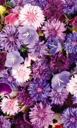 4452 скачать обои Растения, Цветы, Фон - заставки и картинки бесплатно