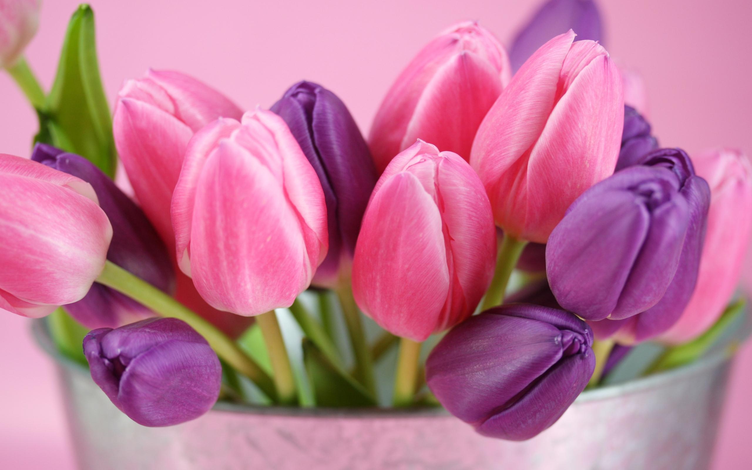 32771 скачать обои Растения, Цветы, Тюльпаны - заставки и картинки бесплатно
