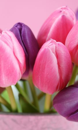 32771 télécharger le fond d'écran Plantes, Fleurs, Tulipes - économiseurs d'écran et images gratuitement