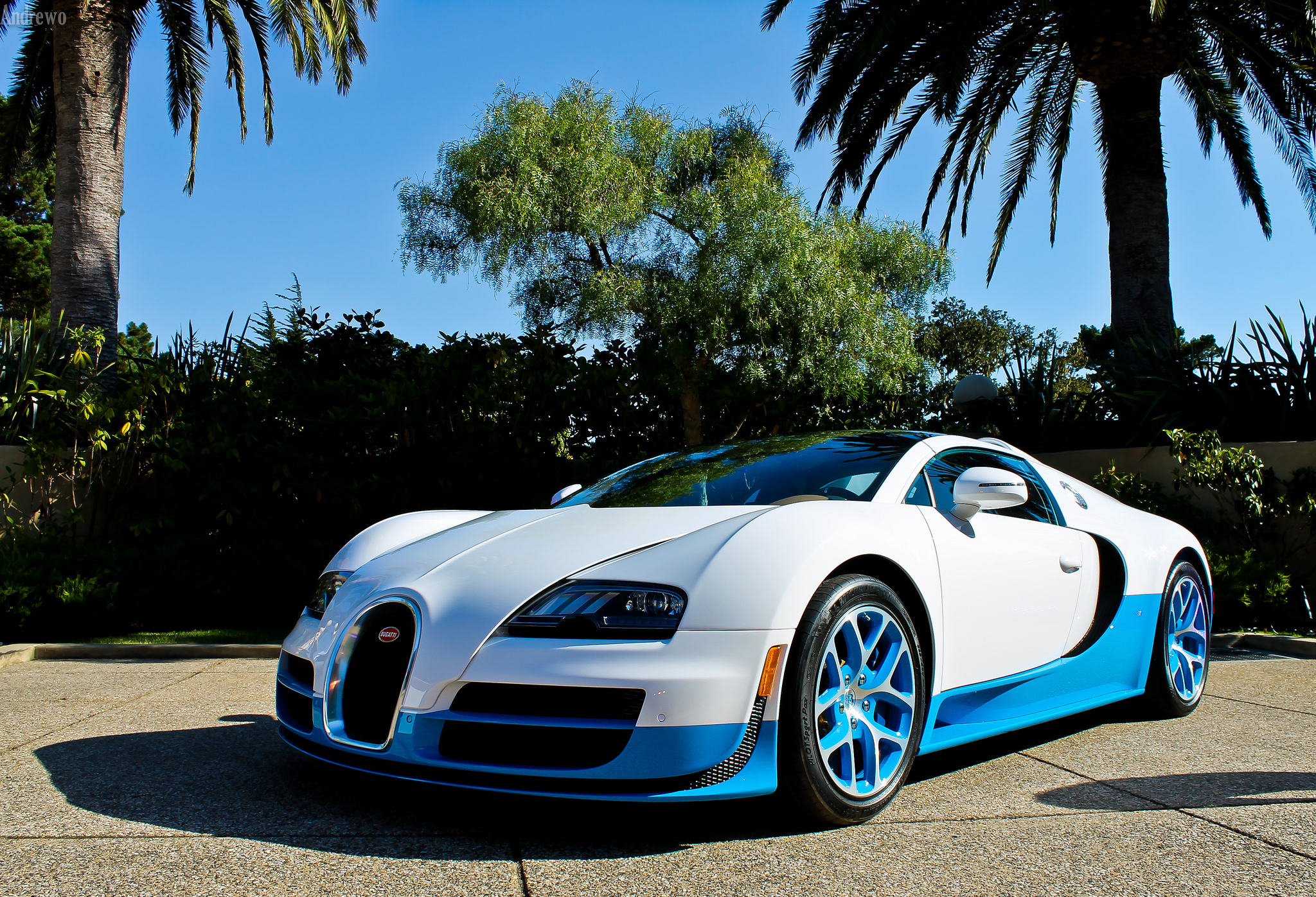 115058 download wallpaper Bugatti, Palms, Cars, Veyron, Vitesse screensavers and pictures for free