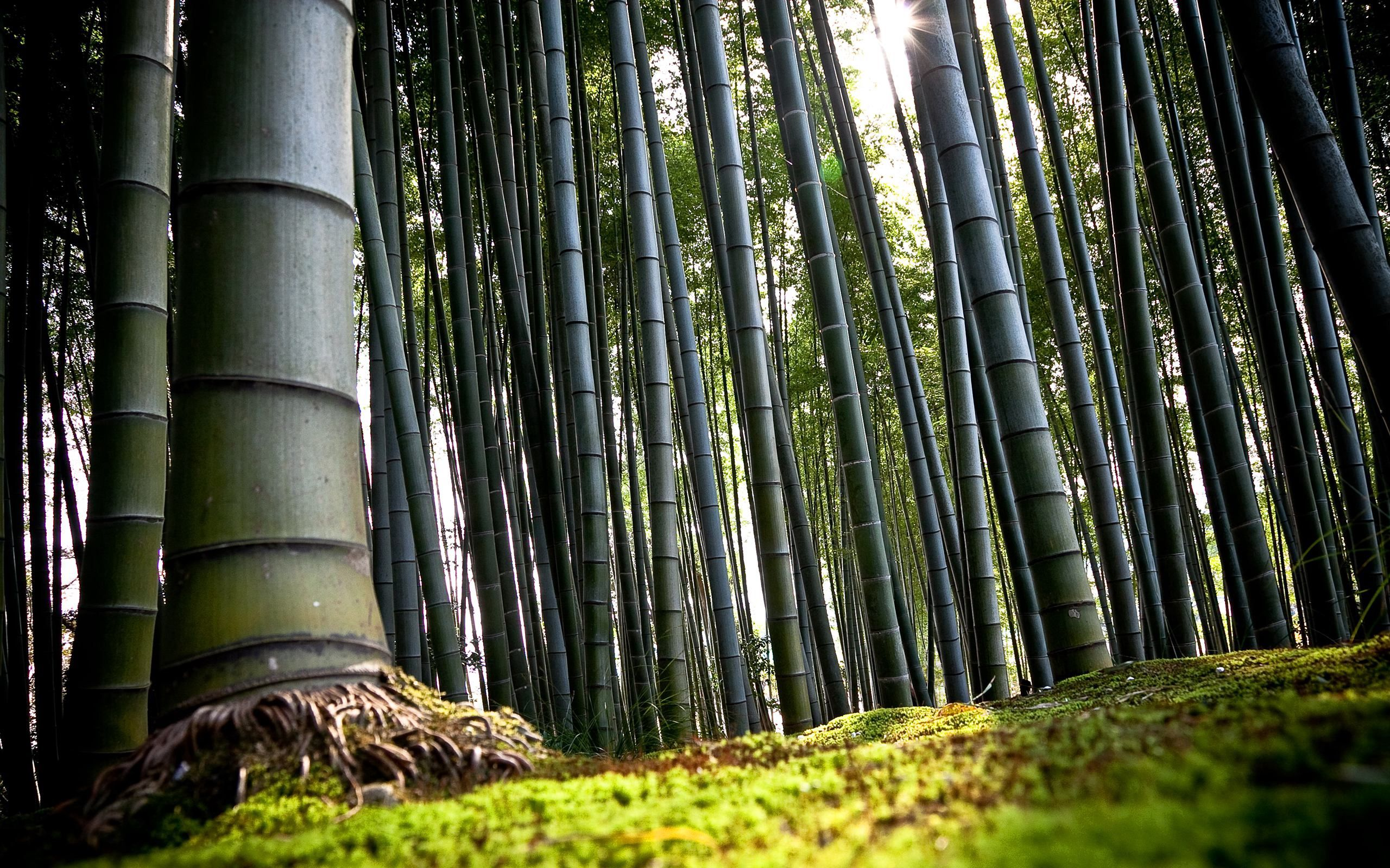 68995 download wallpaper Nature, Bamboo, Stems, Roots, Land, Earth screensavers and pictures for free