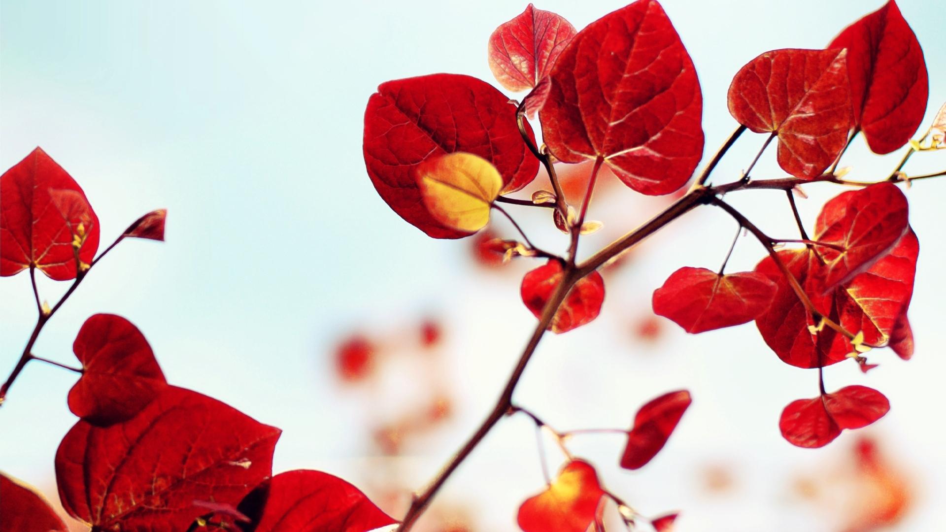 38337 Hintergrundbild herunterladen Blätter, Pflanzen - Bildschirmschoner und Bilder kostenlos