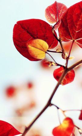 38337 descargar fondo de pantalla Plantas, Hojas: protectores de pantalla e imágenes gratis