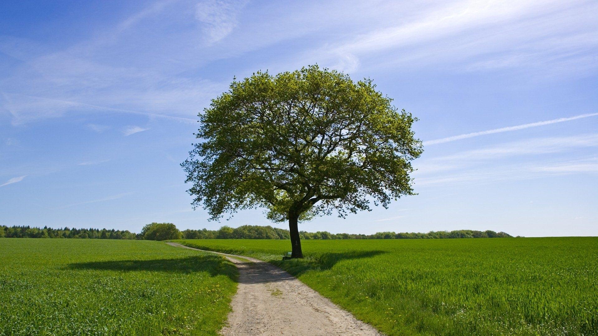 24688 скачать обои Пейзаж, Деревья, Поля, Дороги - заставки и картинки бесплатно