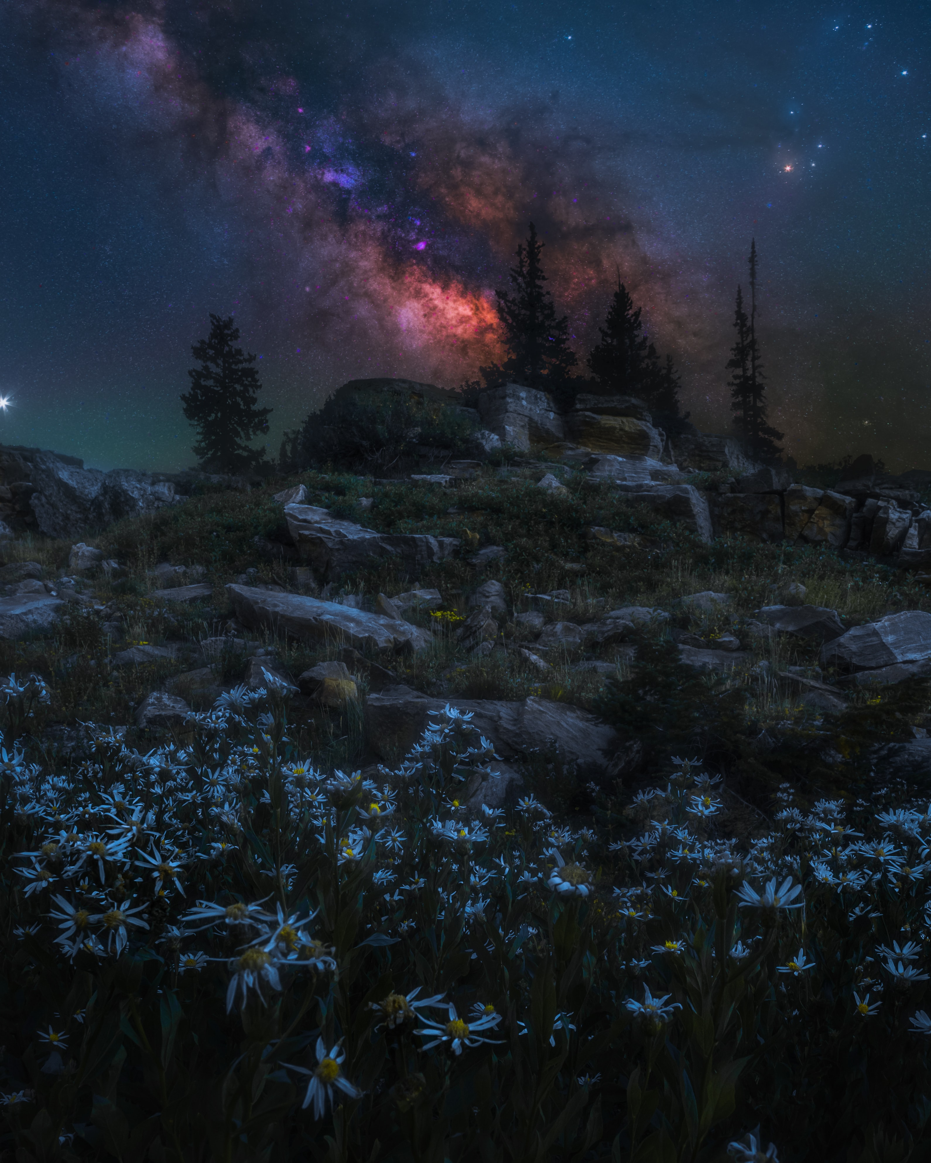 125005 download wallpaper Dark, Nebula, Trees, Camomile, Rocks, Night screensavers and pictures for free