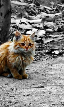 7917 download wallpaper Animals, Cats screensavers and pictures for free