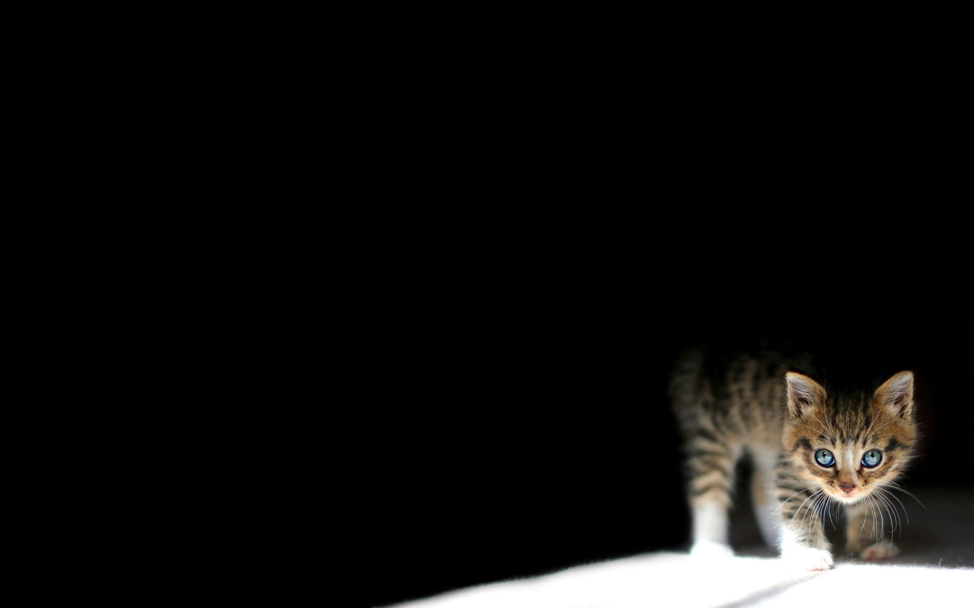 62615 download wallpaper Animals, Kitty, Kitten, Dark, To Lie Down, Lie screensavers and pictures for free